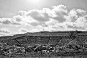 Vicoli&Sapori IV Edizione su wineinsicily.com